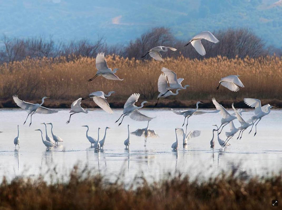 Go birdwatching at the Gialova Lagoon