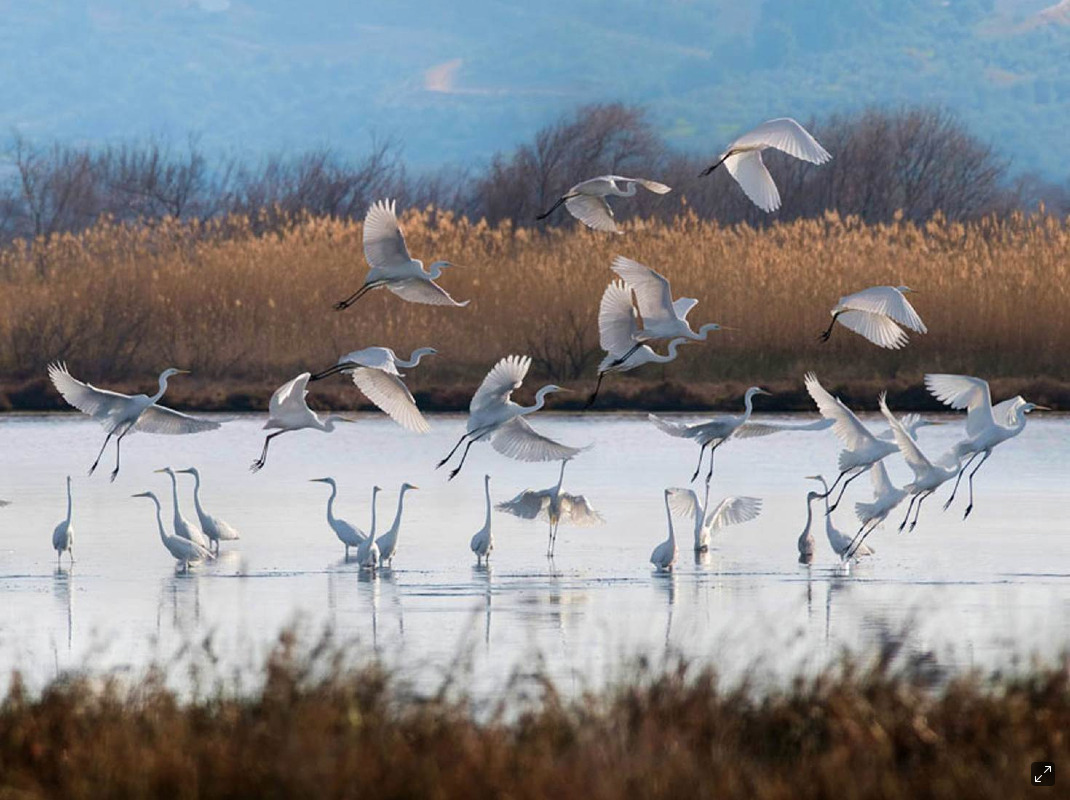 Go birdwatching at the Gialova Lagoon